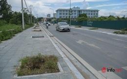 Cây chết khô, um tùm cỏ dại, rác thải bủa vây đường nối đại lộ Thăng Long