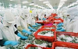 Xuất khẩu tôm sang EU tăng 10% sau khi EVFTA có hiệu lực