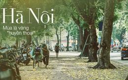 """Con đường cây """"huyền thoại"""" ở Hà Nội lại phủ đầy lá vàng rồi, phải chăng là mùa thu sắp về?"""