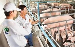 CP Thái Lan mua lại 43 doanh nghiệp chăn nuôi heo của Trung Quốc với trị giá hơn 4 tỷ USD