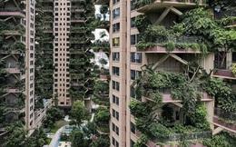 """Trung Quốc tham vọng xây """"thiên đường sinh thái"""" nhưng lại hóa thành phố ma vì… muỗi"""