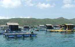 Nghề nuôi trồng thủy sản lao đao