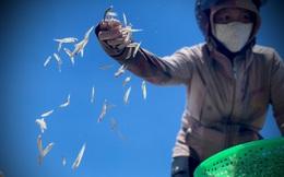 Ngư dân Hà Tĩnh trúng đậm cá cơm, mỗi ngày thu tiền triệu