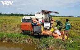 Vụ lúa Hè Thu ở Quảng Bình đạt năng suất cao dù hạn hán kéo dài