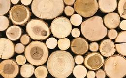 Quy định mới về quản lý gỗ nhập khẩu, xuất khẩu có hiệu lực từ 30/10