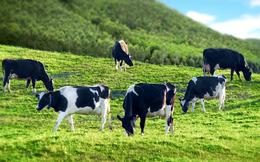 Về tay Blue Point, sữa Quốc tế (IDP) chuẩn bị lên sàn Upcom với mức định giá hơn 2.900 tỷ đồng