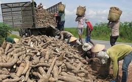 Xuất khẩu sắn và sản phẩm sắn năm 2020 đạt 989 triệu USD