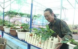 Đà Nẵng: Hoa thường rớt giá, hoa 'sang' lo ế