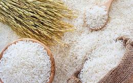 Giá gạo Việt Nam vượt đỉnh 9 năm, gạo Ấn Độ và Thái Lan vẫn cao nhất nhiều tháng