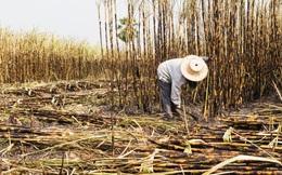 Thuế phòng vệ: Giải pháp cho thâm hụt thương mại ngành đường