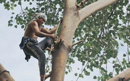 """Gặp vua khỉ U50 ở miền Tây: """"27 năm thích leo trèo, dù bị ong chích, kiến đốt đến phát sốt vẫn thấy bình thường"""""""