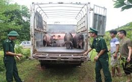 Phối hợp chỉ đạo tăng cường kiểm soát vận chuyển lợn, sản phẩm từ lợn qua biên giới