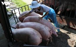 Thủ tướng yêu cầu bình ổn giá thịt lợn dịp cuối năm