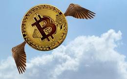 Tiền lại đổ vào Bitcoin đẩy giá tăng vọt lên trên 31.000 USD