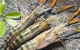 Thực phẩm Sao Ta (FMC) chốt quyền tạm ứng cổ tức bằng tiền đợt 1/2020 tỷ lệ 20%