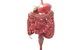 Đường ruột là gốc của bệnh tật: Hãy làm 5 điều sau để dọn sạch cặn bã trong đường ruột