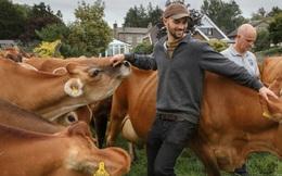 """Con người cần kiêng thịt bò nếu không muốn tự """"nấu chín"""" mình"""