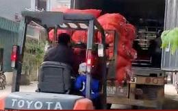 Hải Dương xuất bán 48 tấn cà rốt trong ngày mùng 1 Tết