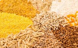 """""""Nóng"""" thị trường thức ăn chăn nuôi do khâu nguyên liệu"""