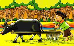 Năm Sửu đọc truyện anh nông dân và con Trâu: Lời phàn nàn muôn thuở của các nhân viên chăm chỉ và bài học quản lý cho các nhà lãnh đạo