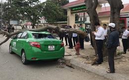 Nam tài xế và khách thoát chết khi vừa ra khỏi cửa thì cây đổ, đè bẹp xe taxi