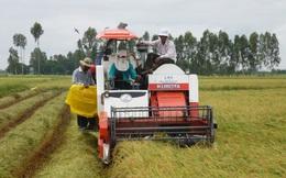 Cầu cao, nguồn cung hạn chế đẩy giá gạo Đông Xuân tăng mạnh