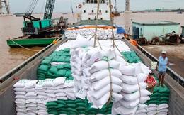 Giá gạo Việt Nam cao nhất trong một thập kỷ