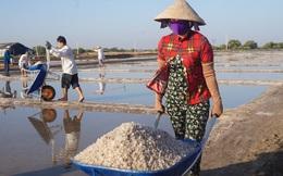 Cận cảnh 'nghề gieo nước biển' đầu năm ở phương Nam