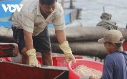 Cá cơm, ruốc biển giúp ngư dân Quảng Bình có thu nhập cao