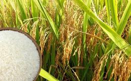 Trung Quốc năm nay sẽ thay thế Philippines trở thành nước nhập khẩu gạo lớn nhất thế giới