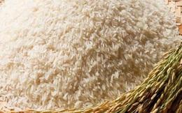 Giá lúa cao làm giảm một nửa xuất khẩu gạo