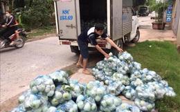 Hàng trăm ha rau màu ở xã vùng dịch của Hưng Yên bị ế đọng