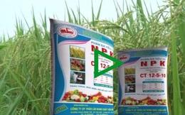 Triển vọng thị trường phân bón thế giới năm 2021 sẽ sôi động cùng nhịp thị trường ngũ cốc