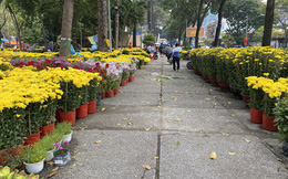 Hoa Tết vắng người mua, sức mua giảm mạnh, thương lái bỏ cọc, chưa khi nào hoa Tết lại ế ẩm như năm nay