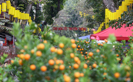 CLIP: Phố hàng Mã rực rỡ sắc đỏ hút khách ngày cận Tết Nguyên đán Tân Sửu 2021