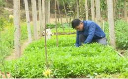 Thanh niên Bắc Kạn trồng rau, trồng nấm...thu hàng trăm triệu đồng mỗi năm