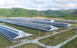 Đầu tư hệ thống điện mặt trời tại toàn bộ các trang trại, Vinamilk đẩy mạnh năng lượng bền vững