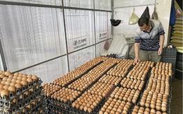 Nghệ An: Giá trứng gia cầm liên tục chạm đáy, người chăn nuôi điêu đứng