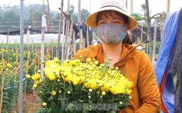 Người dân làng Tây Tựu phấn khởi vì giá hoa 'hồi sinh'