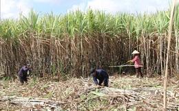 Doanh nghiệp đường có thể được hưởng lợi từ chính sách chống bán phá giá