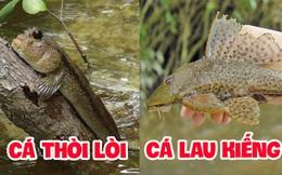 """Việt Nam có 5 loại cá được xem là đặc sản nức tiếng, nhìn thì """"sợ bỏ chạy"""" nhưng ăn rồi mới thấy cực ngon!"""