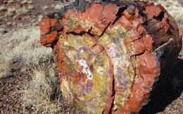 """Gỗ hoá thạch là gì, có ý nghĩa phong thuỷ ra sao mà được giới đại gia """"săn lùng""""?"""