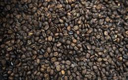 Thị trường cà phê thế giới đối mặt với nguy cơ thiếu hụt nguồn cung nghiêm trọng