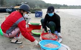 Ngư dân Đà Nẵng nhộn nhịp vào mùa 'xúc' lộc biển