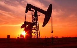Giá dầu sáng nay 9/3 đảo chiều tăng trở lại