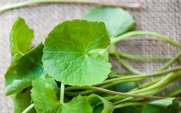 """Loại rau dại này đắt gấp 2 lần rau muống, rau lang và bổ như """"nhân sâm tự nhiên"""" nhưng nhiều người Việt vẫn chưa biết cách dùng đúng"""