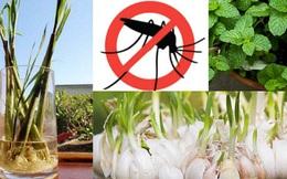 """Từ vụ dùng tinh dầu đuổi muỗi khiến 4 người bị ngộ độc: Không cần dùng tinh dầu, 6 cách đơn giản này sẽ đuổi muỗi """"biến"""" khỏi nhà"""