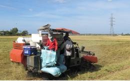 Vụ lúa Đông Xuân được mùa, được giá, nông dân Bình Định phấn khởi