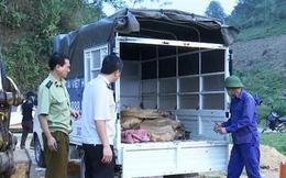 Liên tiếp phát hiện hàng loạt vụ cá tầm nhập lậu từ Trung Quốc vào Việt Nam
