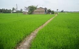 Long An: Chuyển mục đích sử dụng hơn 81ha đất trồng lúc sang đất phi nông nghiệp